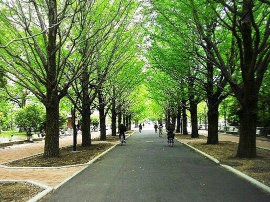 練馬区のペットと一緒に遊べる公園【光が丘公園】